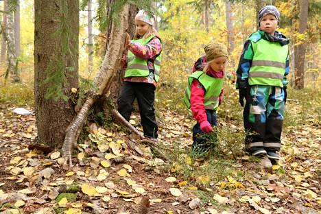 Iines Junnila, Sointu Hämäläinen ja Oskari Leppäaho ovat rakentaneet puun juurelle siilille pesän.