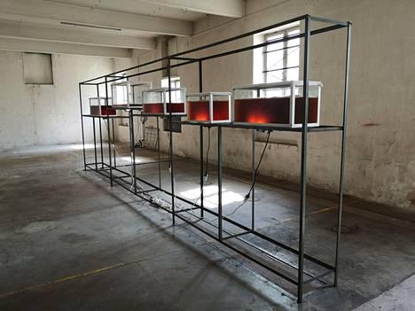 T.E.H.D.A.S. -taiteilijaryhmän taiteilija-puutarhureiden laboratoriossa valmistetaan kombuchaa.