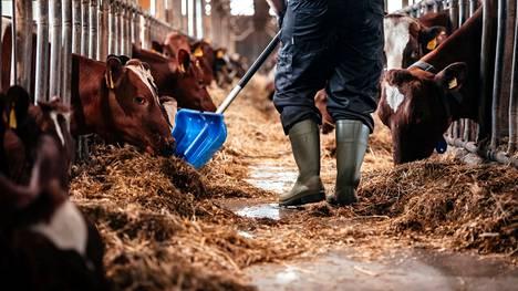 Hyvinvoivat eläimet tuottavat paremmin, joten maatalousyrittäjillä, meijereillä ja lihataloilla on yhteinen halu kehittää tuotantoa yhä enemmän eläinten hyvinvointi edellä, kirjoittajat muistuttavat.