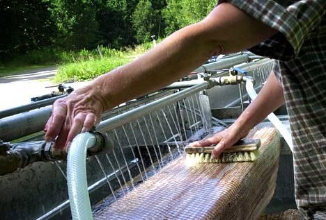Sointulassa on hangattu mattoja maanpäällisellä pesupaikalla tosi pitkään. Tämä kuva on sieltä 20 vuoden takaa.