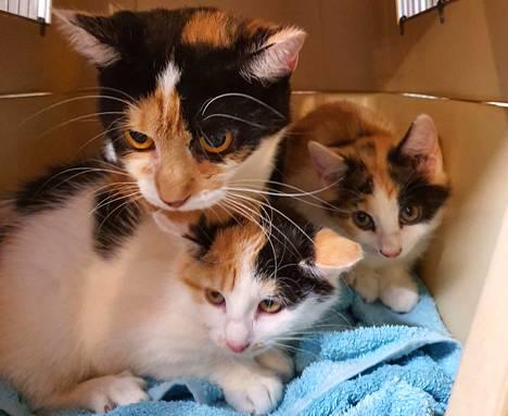 Emo ja kaksi pentua ovat luisevia. Niillä on matoja ja korvapunkkeja, mutta kissat ovat selvästi olleet jonkun lemmikkejä, Mira Ekholm-Martikainen sanoo.