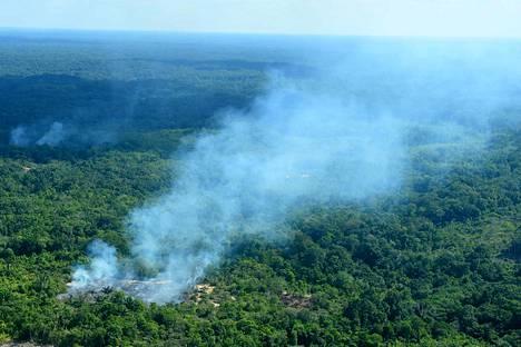 Maastopaloja sytytetään Amazonin sademetsissä pääasiassa sen takia, jotta länsimaihin myytävät naudanliha ja soijarehu saisivat lisää viljelyalaa.