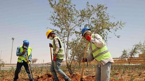 Maaliskuun 2021 lopussa työntekijät istuttivat puita valtatien viereen Riadissa.