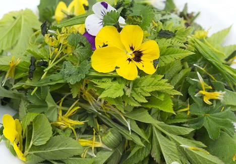Villivihannessalaatti on taatusti herkullista, mutta sen kaltaisia valintoja ei kannata tutkimuksen mukaan tuputtaa kuluttajille. Tässä esimerkissä makua antavat vuohenputken lehtien porkkanavivahde, voikukanlehtien kirpeys, poimulehdet ja vaahteran kukat. Syötävät orvokit kruunaavat vihreän annoksen.
