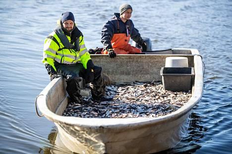 Veneen pohja on mustanaan pääasiassa särkiä, kun Ari Westermark (vas.) ja Petteri Kiiskilä saapuvat rysiltä rantaan Iidesjärvellä.