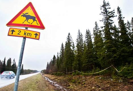 Nopeusrajoitus hirvikolareiden onnettomuuspaikalla oli 14 tapauksessa 100 kilometriä tunnissa ja kuudessa tapauksessa 80 kilometriä tunnissa.