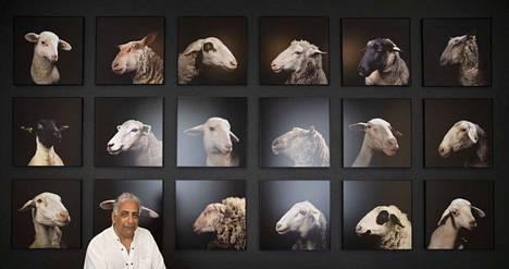 Pariisissa asuva valokuvataiteilija Nabil Boutros kuvasi muotokuvia lampaista teokseensa Ovine Condition (Celebrities). Teoksen lähtökohtana ei ollut tylsyys vaan lampaan rinnastaminen ihmiseen.