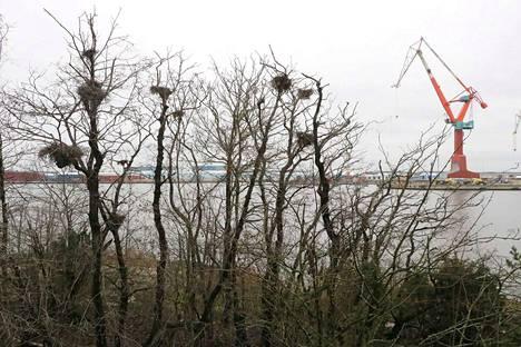 Pengertie on suunniteltu rakennettavaksi meriteollisuuspuistosta Vähä-Järviluodon kautta Iso-Järviluotoon. Ensimmäiset pesäpuut ovat vastassa Vähä-Järviluodon itärannalla.