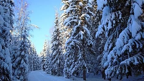 Valkeeniemessä talvi on kietonut puut paksuun lumeen.