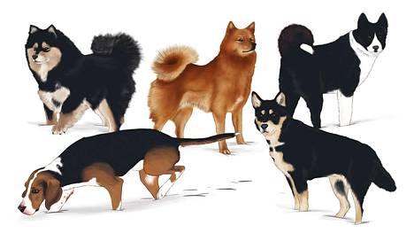 Suomessa on viisi kotimaista koirarotua.