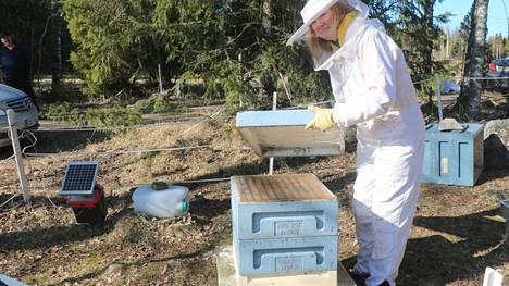 Mehiläistarhaaja Marika Häggqvistin kevättyöt ovat jo alkaneet