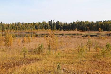 Käkijärven lintutornista näkee, kuinka rehevöitynyt ennen hyvä lintujärvi nykyään on.