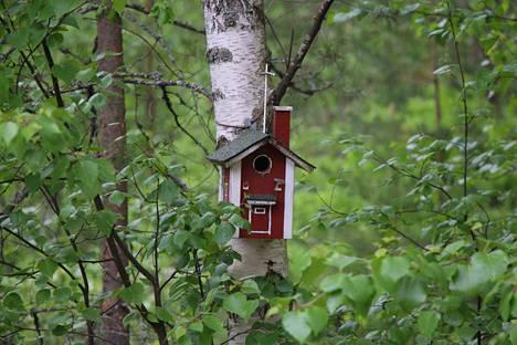 Lauantaina ja sunnuntaina tarkkaillaan linnunpönttöjä ja niidedn asukkeja BirdLife Suomen järjestämässä Pönttöbongaustapahtumassa.
