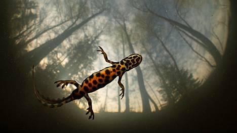 Vuoden luontokuvaksi valittiin Pekka Tuurin taidokas vedenalaiskuva Liskomies. Kuva on myös Muut eläimet -sarjan voittaja.