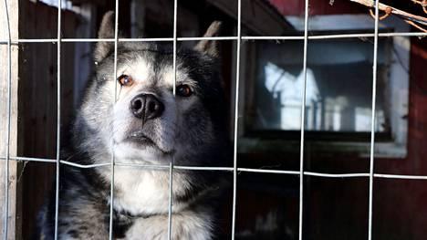 Irrallaan tavatut koirat pyritään toimittamaan löytöeläinkoteihin, mikäli niiden omistaja ei ole tiedossa.