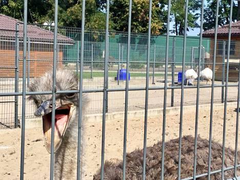 Erikoisuuksiin kuuluu yksityinen eläintarha, jossa vierailija pääsee nykyään tutustumaan strutseihin ja monenlaisiin erikoisiin eläimiin.