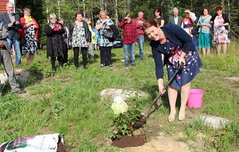 Multian kunnanjohtaja Noora Pajari istuttaa syyshortensian ensimmäiseksi puuksi Sahralinnan tulevaan arboretumiin.