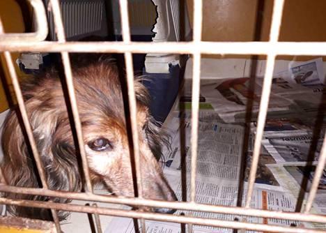 Jokaisen velvollisuus on puuttua eläinten huonoon kohteluun.