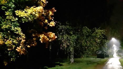 Syysillan ainoat valopilkut: Katuvalot ja ruska-asuinen vaahtera.