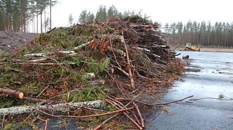 Kirjoittajan mukaan hoidettavista metsistä kerättävä energiapuu korvaa fossiilisia polttoaineita.