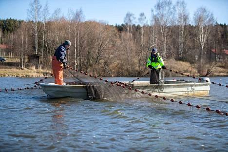 Hoitokalastukseen käytetään Iidesjärvellä kuutta rysää, kertovat Petteri Kiiskilä (vas.) ja Ari Westermark.