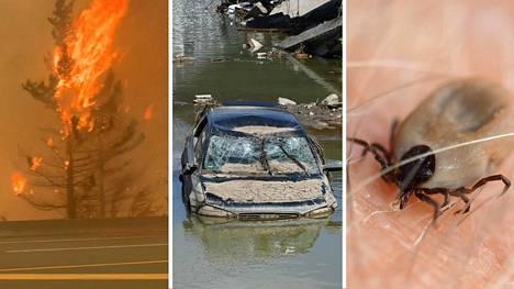 Ilmastonmuutos on jo lisännyt helle- ja kuivuuskausia sekä metsäpaloja ja tulvia. Myös hyönteisvälitteisten tautien, kuten punkkien välittämän borrelioosin, arvioidaan yleistyvän Suomessa.