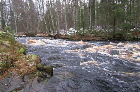 Tamppikosken könkäässä vesi ryöppyää komeasti. Syksyn runsaat sateet tuovat ylimääräiset vedet Multian perukoilta kohti Keurusselkää.