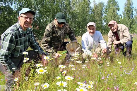 Juhani Kiltinen, Tuomo Kääriäinen, Jouko Pihlainen ja Tapani Asunta kartoittavat kesän aikana kimalaisten määrää Keuruulla.