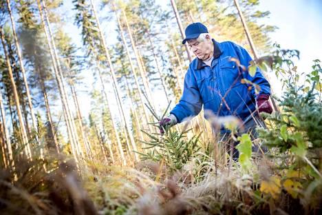 Metsät ovat valtion, yhtiöiden ja yksityishenkilöiden omaisuutta. Talousmetsiä hoidetaan kuten muutakin varallisuutta. Lisäksi metsät ovat osa suomalaista kansallismaisemaa ja monimuotoista hyöty- ja virkistyskäyttöä. Metsien uudistamisvelvoitteesta määrätään metsälaissa. Eläkeläinen Teuvo Liljeqvist suhtautuu metsänhoitoon vakavasti. – Jos sitä ei viitsi hoitaa, ei sitä kannata omistaakaan.