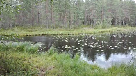 Kuva Lempäälän luonnonkauniilta Ammejärveltä.