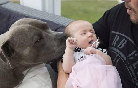 Putin-koira on omaksunut suojelevan asenteen pikkuista tulokasta kohtaan. Vauva sai kuvauspäivänäkin helliä pusuja.
