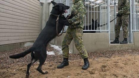 Nöyryyttävä koulutustilanne sattui Porin prikaatissa Niinisalossa. (Kuvan koirat ja henkilöt eivät liity tapaukseen).