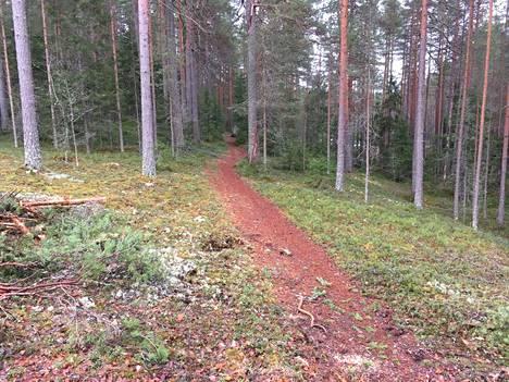 –Metsäpolkuverkosto pirstaloituu hiljalleen, kun hakkuualueilla ajaneiden metsäkoneiden jäljet katkaisevat yhteyden seuraaville polkuosuuksille, kirjoittaa Mikko Koponen. Kuva hakkuuaukelta polulle päin.