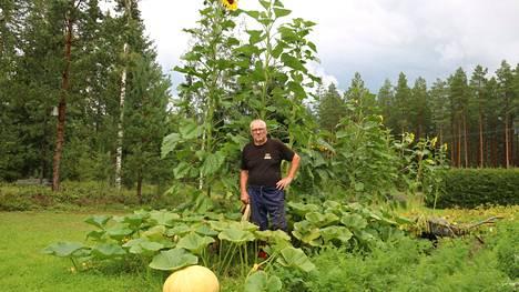 Erkki Viljanen mittasi korkeimman auringonkukan korkeudeksi 3 metriä 36 senttiä.