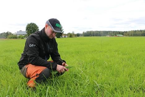 Hiiltä sitova kasvimassa kasvaa taukoamatta Janne Paloviidan nurmipellolla.