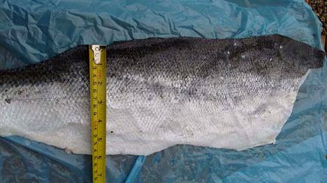 Tuotteissa käytetty kalannahka tulee ruokateollisuuden jätteenä. Pääasiallinen materiaali on lohennahka.