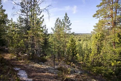 Taaporinvuoren ja Kurikkakallion luontoalueelle Pirkkalassa pääsee vaikka bussilla. Kurikkakalliolta avautuvat komeat maisemat.