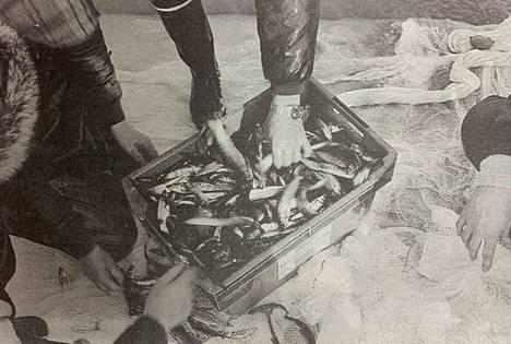 Ensi kesänä vapautuvan kalakaupan uskotaan vaikeuttavan kotimaista ammattikalastusta. Arkistokuva vuodelta 1990.
