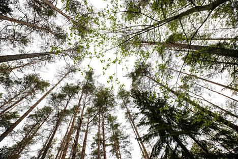 Kirjoittaja on huolissaan Suomen metsien käyttöoikeudesta.