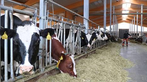Janne Paloviidan moderni pihatto on yksi osa entistä ympäristöystävällisempää maatilaa.