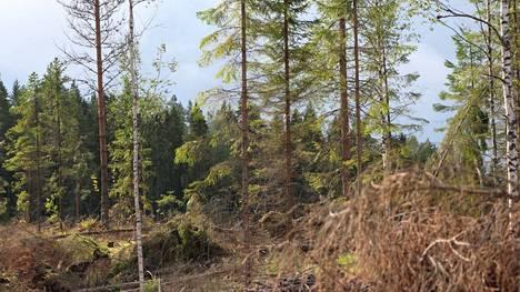 Valtion kemera-tukea metsänhoitotöihin saa vuosittain noin 70000 metsänomistajaa.
