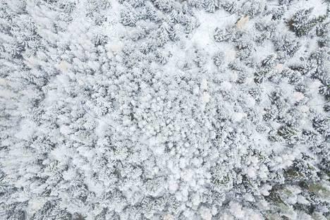 Metsä peittyi lumeen.