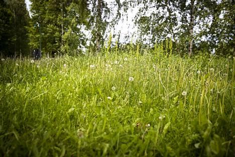 Tekstareissa pohditaan tällä kertaa muun muassa nurmikon leikkaamista ja leikkaamattomuutta, Jämin hiihtoputken muuntamista, tuijien merkitystä ja Porin uutta liikenneympyrää.