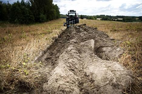 Ville Koivuniemi kääntää heinäpeltoa syysrukiin kylvöä varten. Veden puutteen vuoksi pellolle on jäänyt ravinteita, jotka tarjoaisivat syysrukiille hyvän kasvualusta. Edellytyksenä kuitenkin olisi, että kuiva maa saisi syksyllä sateita.