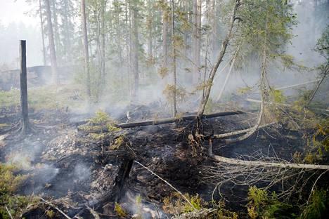 Metsäpalovaroitusten aikana avotulen teko on kielletty suuren metsäpaloriskin vuoksi. Kuvituskuva.