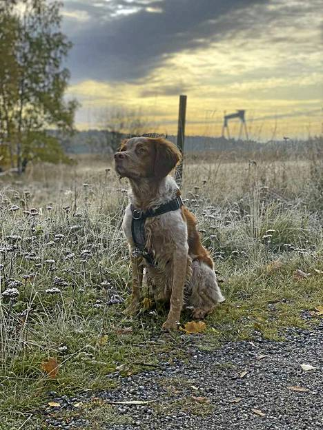 Reetta Saviranta lenkkeili koiransa kanssa Raisiossa. Tuloksena oli tämä kuva.