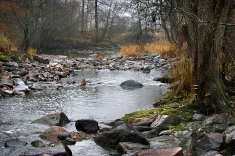 Eurajoki saa alkunsa Pyhäjärven pohjoispäästä ja laskee Eurajoensalmeen Olkiluodon läheisyyteen. Arkistokuva Eurajoen Paneliankoskelta vuodelta 2009.