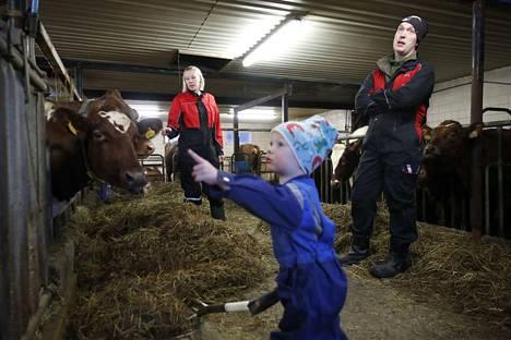 Maitotilalliset Johanna ja Jouni Riihiaho kertovat, minkälaisessa paineessa he joutuvat toimimaan hiilijalanjälkikeskustelun vuoksi kaiken muun paineen lisäksi. Kahdenkymmenen lypsylehmän tila sijaitsee Merikarvian Lauttijärvellä. Kuvissa myös yksi kaksivuotias Aapo, yksi perheen kolmesta lapsesta.