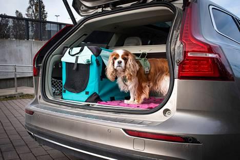 Liikenneturvan mukaan koiran pitää olla tavaratilassa kytkettynä niin, ettei se pääse karkaamaan matkustajatilaan tai ulos autosta, kun ovia tai ikkunoita avataan.