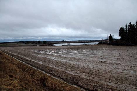 Tänä talvena pellot ovat kylpeneet vedessä. Kunnollista lumihankea ei ole vielä päässyt syntymään.